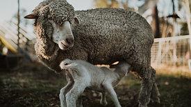 360˚ Animal Nursery