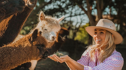 Meet an Alpaca Farmer