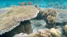 Alfabetización Oceánica
