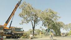 Dixon's Trees 30sec