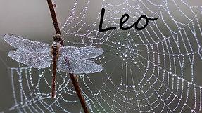 LEO - Manifesting your TRUE love!!