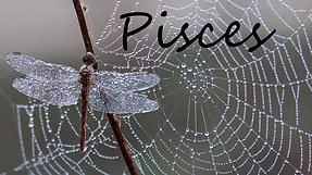 PISCES FULL - You're headed for an amazing and beautiful life!!
