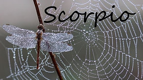 SCORPIO - Burning it to the ground!!