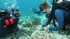 Coralpalooza 2018