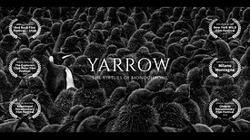 YARROW: The Virtues of Monochrome