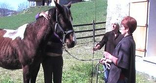 Travail sur le cheval (PART I)