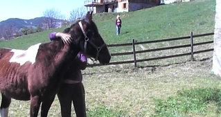 Travail sur le cheval (PART II)