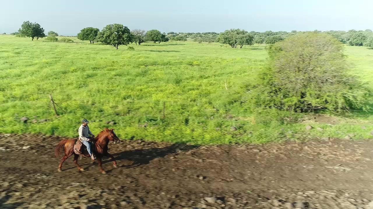 Runing Horse #2