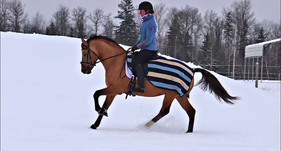 Deja D'Or playing in the snow Nov 2020