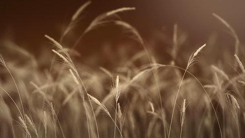 Low Fi Harvest