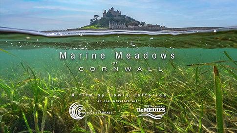 Marine Meadows Cornwall