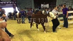Congratulations Taylor Orrell 2019 Arkansas State Fair Spring Livestock Show