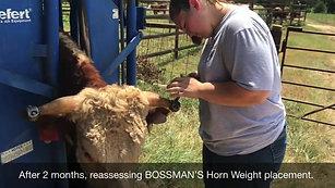 Taylor Orrell Adjusting Horn Weights