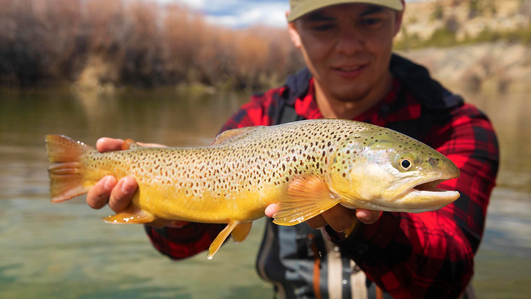 The Fly Fishing Primer