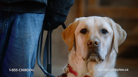 CNIB Guide Dogs - Waiting & Training 60s Video