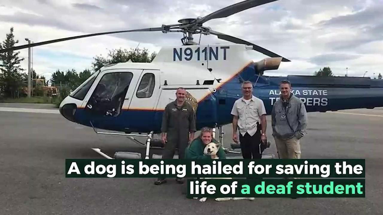 Husky saves deaf hiker