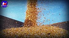 Copy of cornbags_FULL_HD