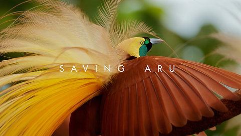 Saving Aru