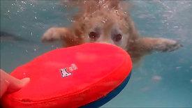 Cooper underwater