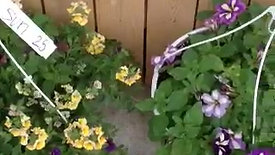 $29.99 Hanging Basket Group 3