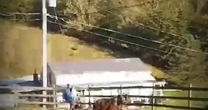 Tammi and Toni team of 14 year old mini mares well broke to work and ride. Easy to catch in the pasture nice pair to have around
