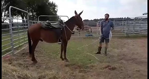 Brock 8yr old 15+ HD  John he is as pretty as they come gentle  and broke  to ride