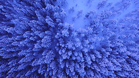 Aerial Shot Of Forest Covered In Snow
