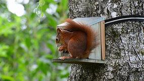 Squirrel Eatin