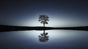 Reflection Of Tree At Night