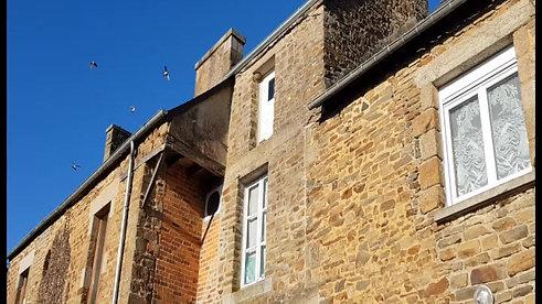 Hirondelle de fenêtre1