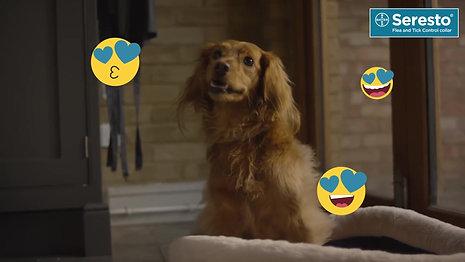Seresto TV Commercial (Style Guide: Fun & Bright)