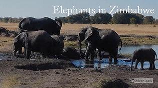If you visit Zimbabwe: Elephants