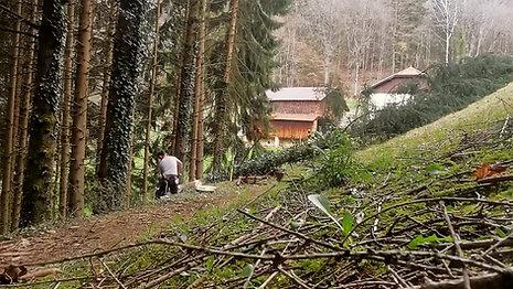 Time-lapse lisière plantation épicéa