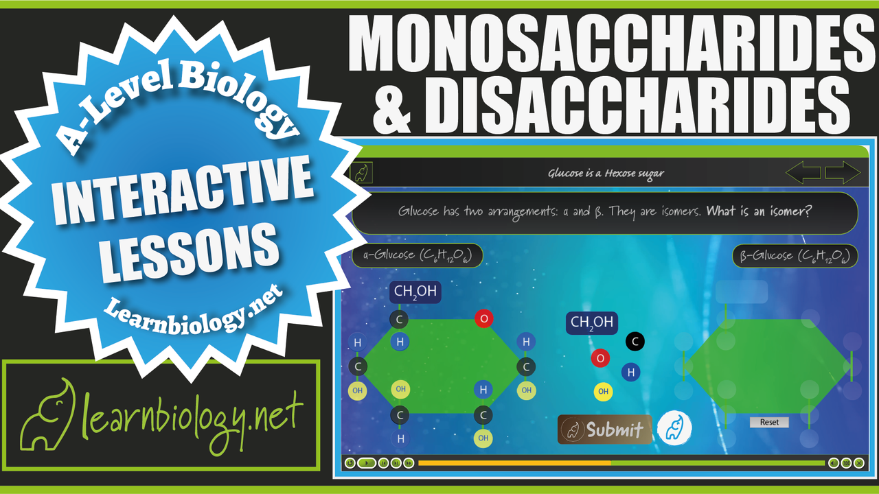 A Level Biology Monosaccharides and Disaccharides (Lesson Walkthrough)