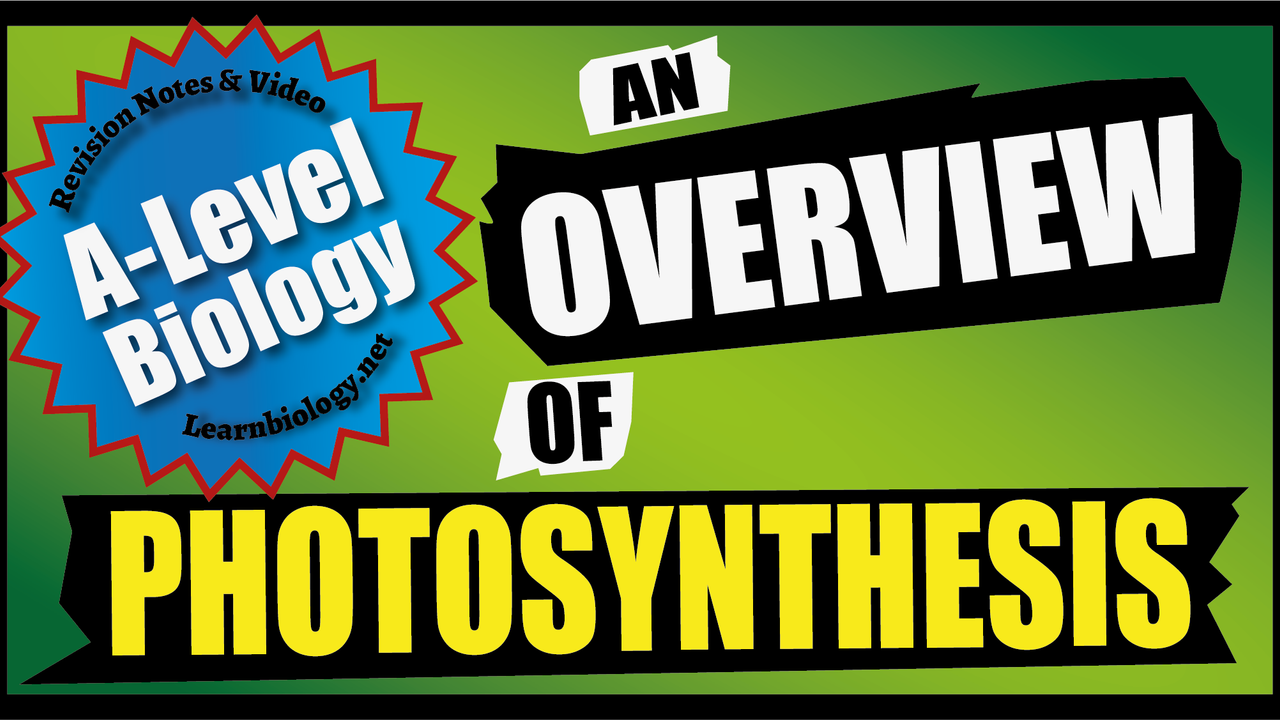 A Level Biology An Overview of Photosynthesis
