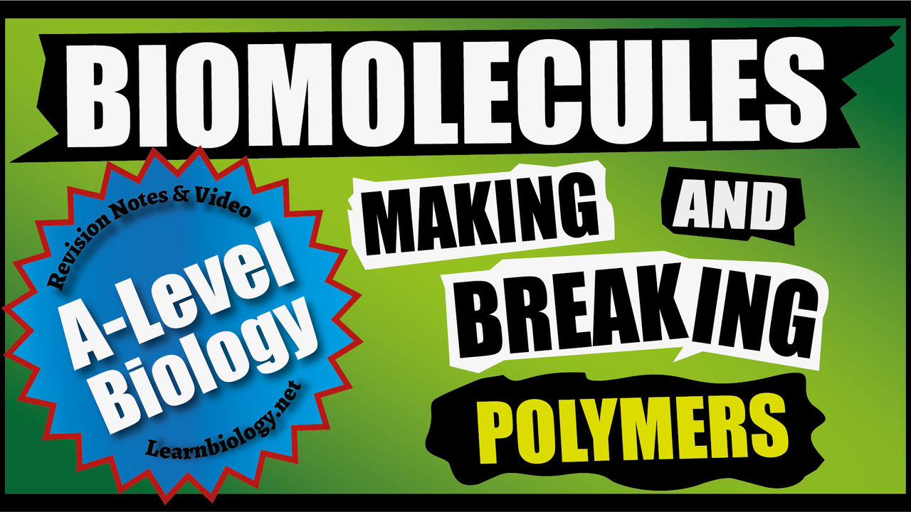 A Level Biology: Making and Breaking Polymers
