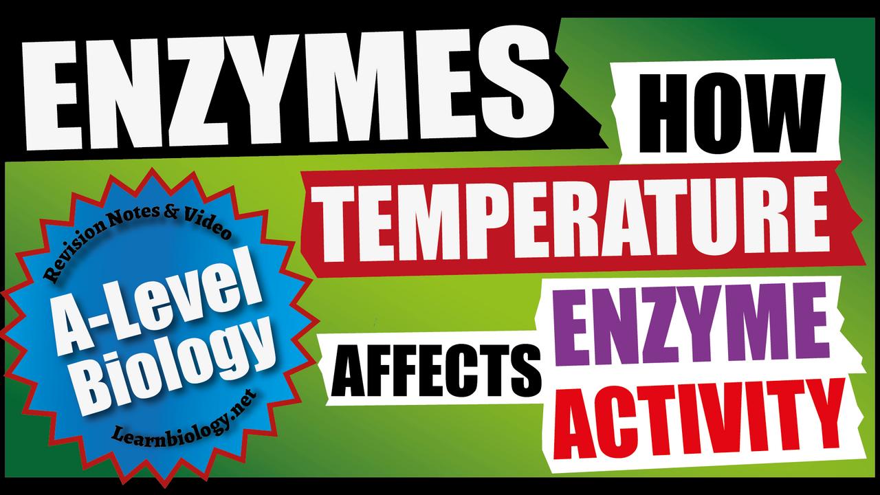 A Level Biology Factors affecting Enzyme activity - Temperature