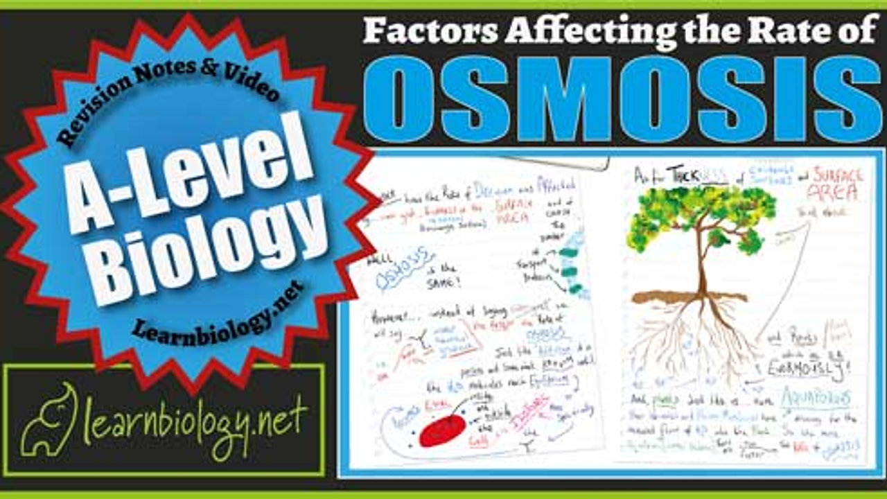 A Level Biology Factors Affecting the Rate of Osmosis