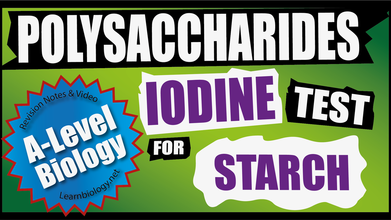 A Level Biology - The Iodine Test for Starch