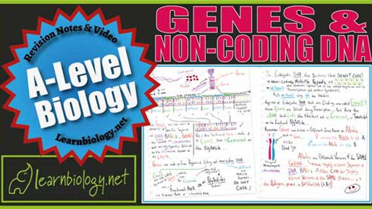 A Level Biology Genes and Non-Coding DNA