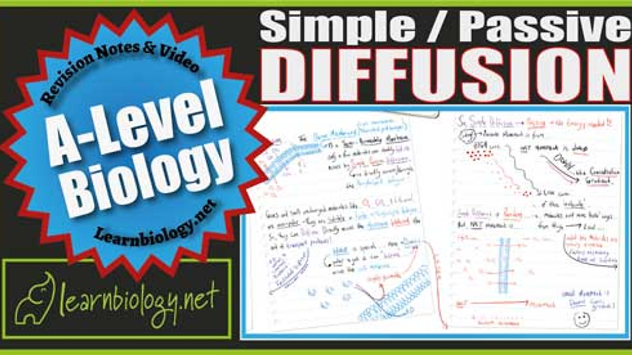 A Level Biology Simple - Passive Diffusion
