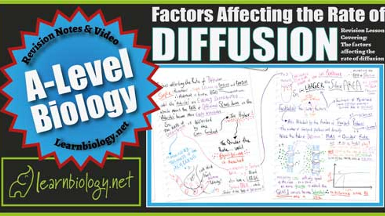 A Level Biology Factors Affecting the rate of simple and facilitated diffusion