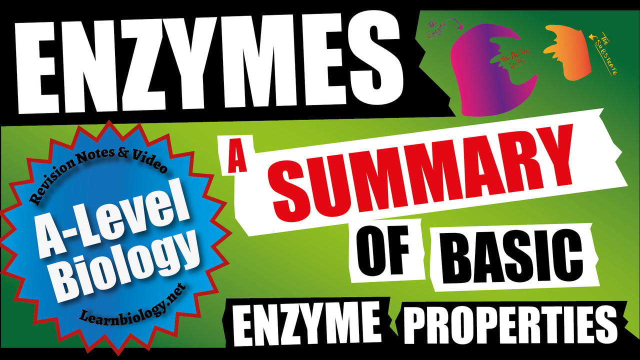 A Level Biology Basic Enzyme Properties