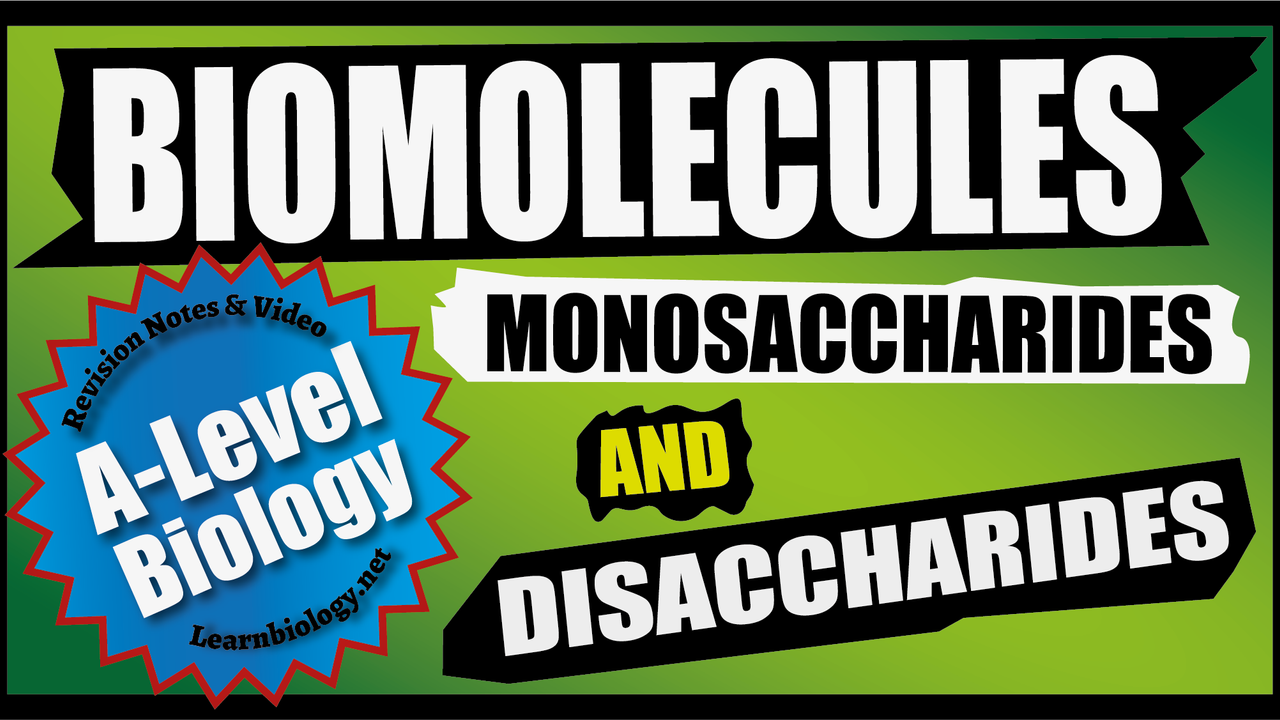 A Level Biology: Monosaccharides and Disaccharides