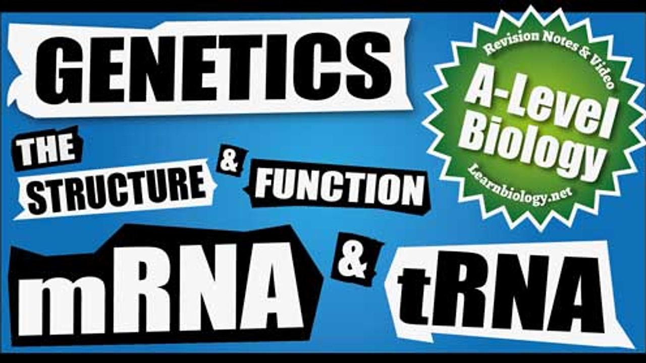 A Level Biology mRNA and tRNA