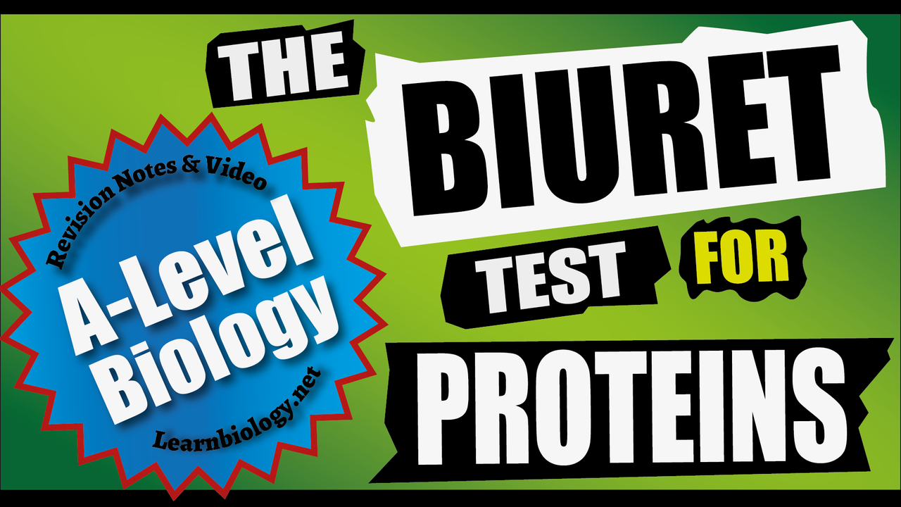 A-Level Biology The Biuret Test for proteins