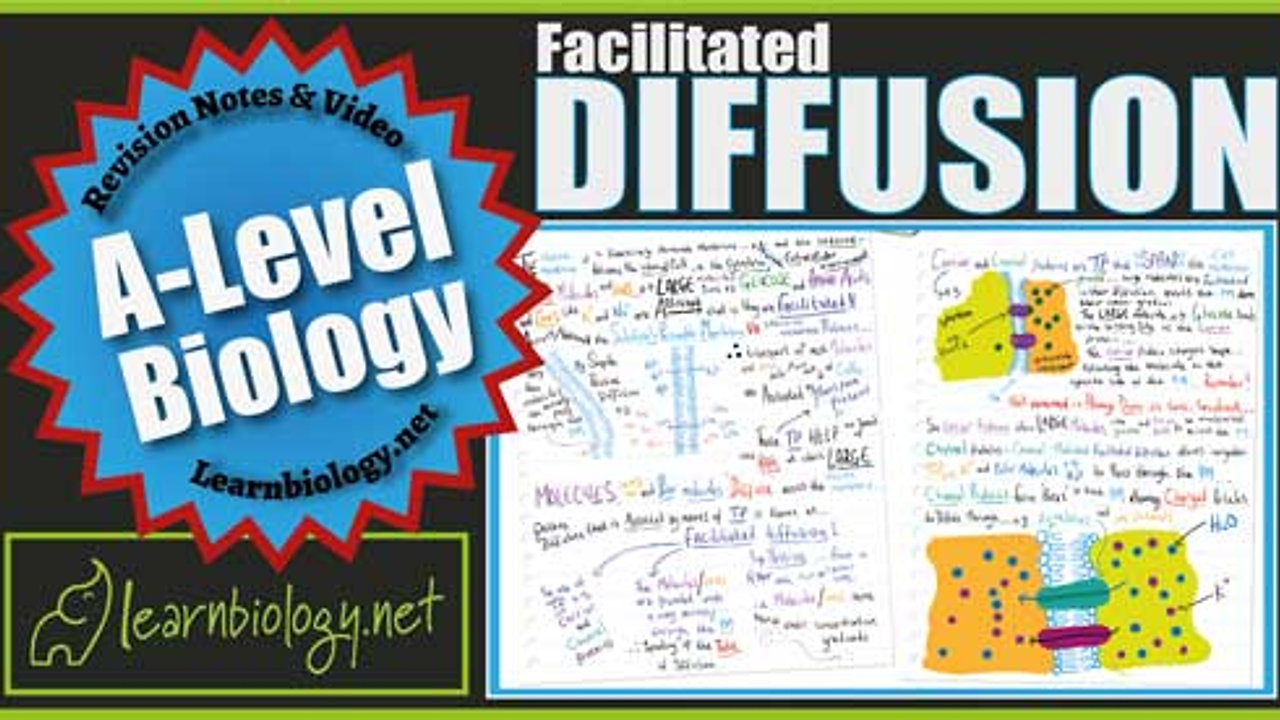 A Level Biology Facilitated Diffusion