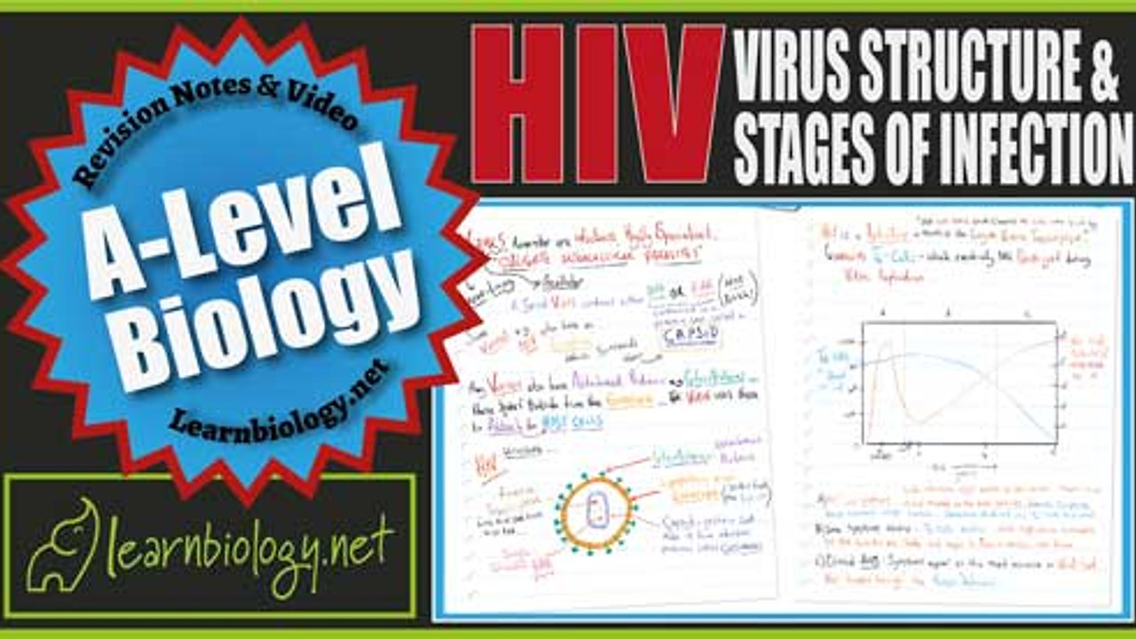 A Level Biology HIV Virus Structure