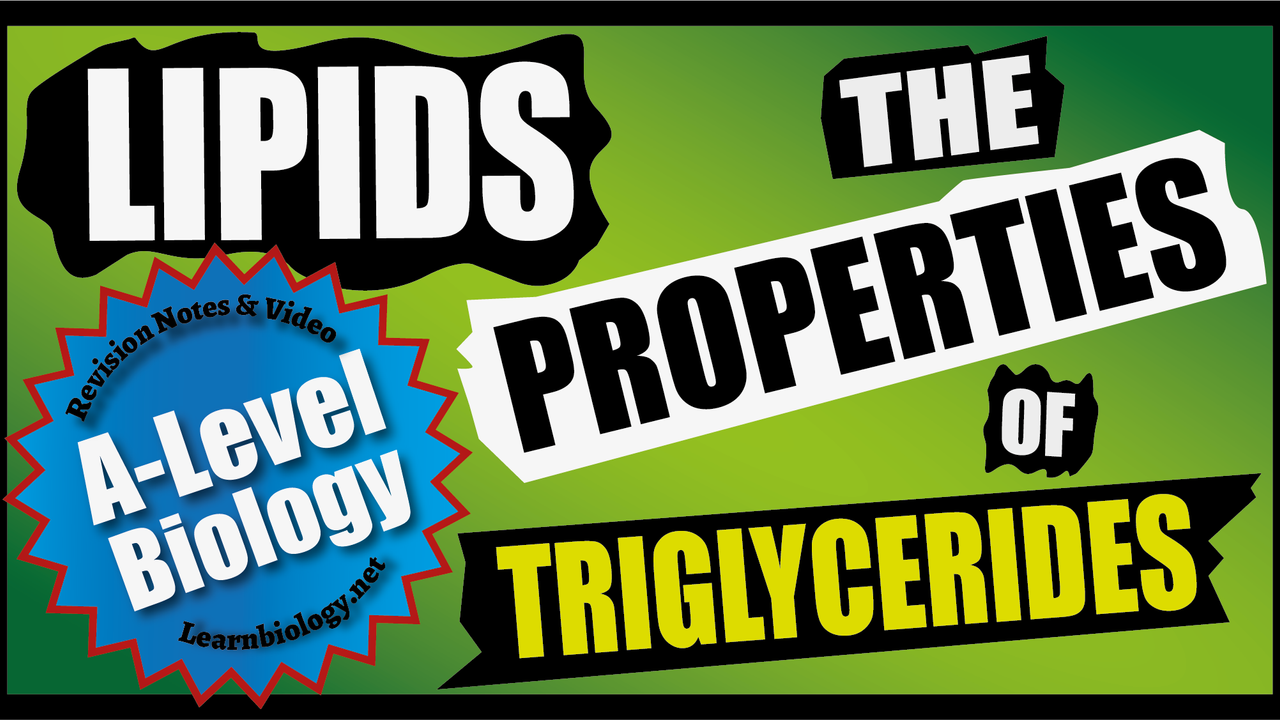 A Level Biology - The Properties of Triglycerides