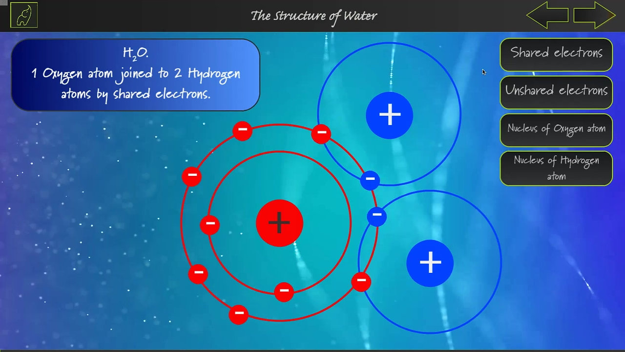 A Level Biology The Structure of Water
